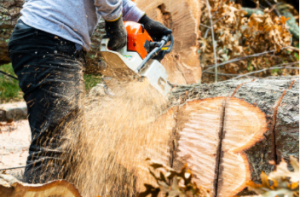 stump removal located in Sydney
